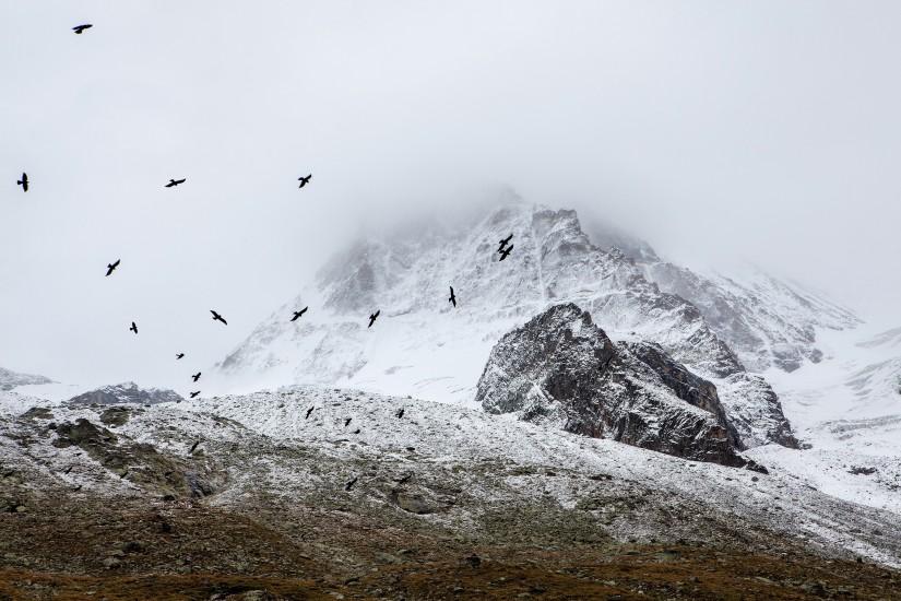 birds-cold-fog-4037-825x550-1