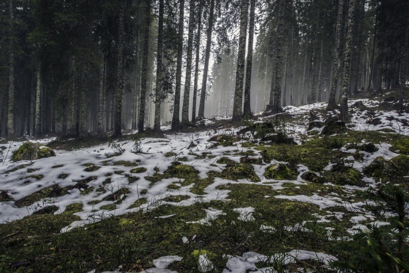 forest-nature-snow-4058-824x550-1